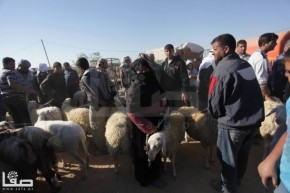 Oct 9, 2013 Sacrificial animals market in Khan Yunis - Photo by SAFA