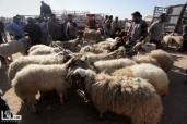 Oct 9, 2013 Sacrificial animals market in Khan Yunis - Photo by SAFA